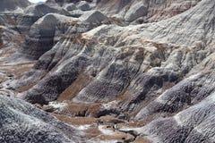 化石森林国家公园 库存照片