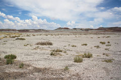 化石森林国家公园 免版税库存照片