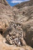 化石森林巴塔哥尼亚阿根廷 免版税库存照片