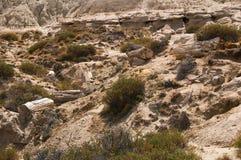 化石森林巴塔哥尼亚阿根廷 库存照片