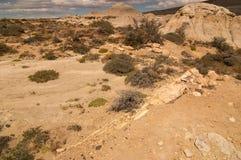 化石森林巴塔哥尼亚阿根廷 库存图片