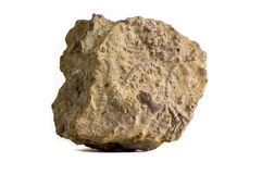 化石海洋富有的岩石 免版税库存照片