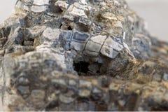 化石珊瑚极端宏观照片  免版税库存照片