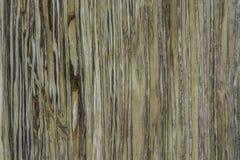化石的俏丽的被仿造的表面 免版税库存照片