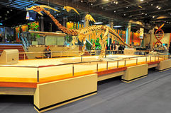 化石香港博物馆 图库摄影