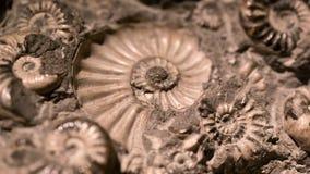 化石&炸药燃料能的 免版税图库摄影