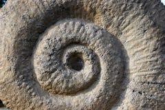 化石 库存图片