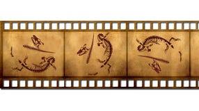 化石 免版税库存图片