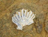 化石01 库存图片