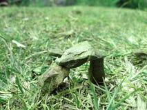 绿化石头 免版税库存照片