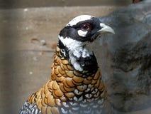 北京动物园鸟 免版税库存图片