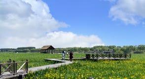北京杭州大运河沼泽地风景在通州,中国 免版税库存照片