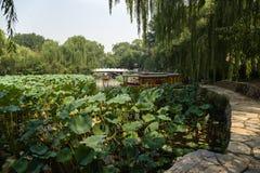 北京瓷 在城市公园筑成池塘,长满与莲花 库存图片