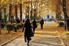北京科技大学的角落 免版税库存图片