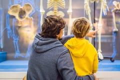 北京,中国,2018年10月16日:爸爸和儿子观看古老和现代人的骨骼 人类演变 图库摄影