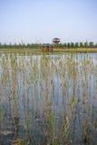 北京gardenexpo公园 库存照片