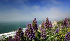 北加利福尼亚 免版税库存照片
