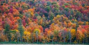 北安大略的五颜六色的山坡森林 库存照片