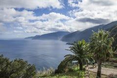 北岸,与棕榈的一个看法,马德拉岛,葡萄牙 免版税图库摄影