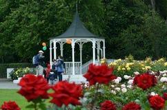 北帕莫斯顿NZL玫瑰园  免版税库存图片