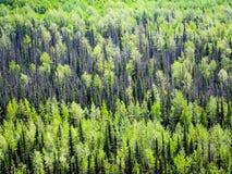 北方森林在阿拉斯加 库存图片