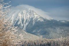 北方森林-雪盖 库存图片