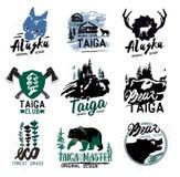 北方针叶林商标标志 森林略写法 熊taiga象征 葡萄酒野营的商标 库存照片