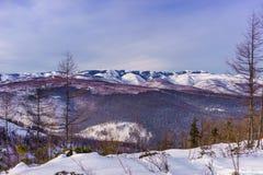 北方针叶林在冬天盖了山 图库摄影