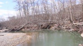 北方针叶林河在早期的春天在一多云天 影视素材