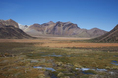 北智利的Altiplano 库存图片