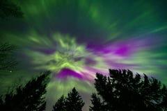 北极光和树上面 库存照片