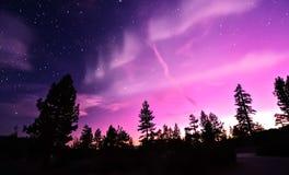 北极光在树的极光borealis 免版税图库摄影