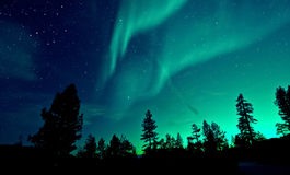 北极光在树的极光borealis 图库摄影