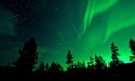 北极光在树的极光borealis 库存照片