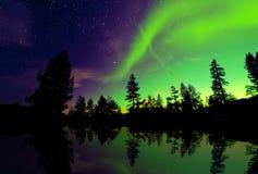 北极光在树的极光borealis 库存图片