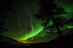 北极光在瑞典森林里 免版税库存照片