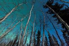 北极光绿色漩涡在北方森林的 免版税库存照片