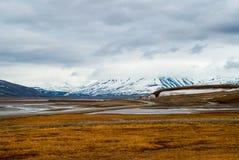 北极寒带草原在夏天,斯瓦尔巴特群岛 免版税图库摄影
