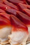 北极海浪蛤蜊 免版税库存图片