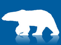 北极熊加拿大冻结的湖极性剪影日落 库存照片