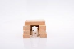 北极熊和bullding的块 免版税图库摄影