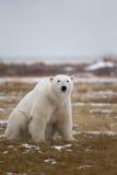 在下的蝴蝶北极熊stockphotos192在下的白色男主角死了变成一只白色的mv图片