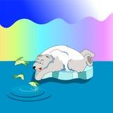 北极熊抓在冰的鱼 免版税库存照片