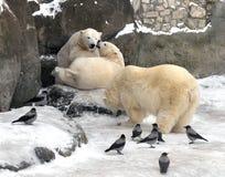 北极熊母亲和两头小熊 免版税图库摄影
