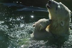 北极熊系列 免版税库存图片