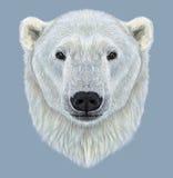 北极熊被说明的画象  免版税库存照片