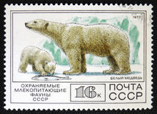 北极熊,大约1977年 库存照片