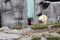 北极熊洞。动物园。 免版税库存图片