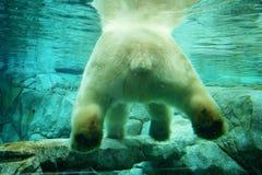 北极熊水下的景色 库存照片