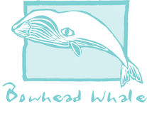 北极露脊鲸 免版税库存照片